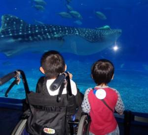 1月美ら海水族館21